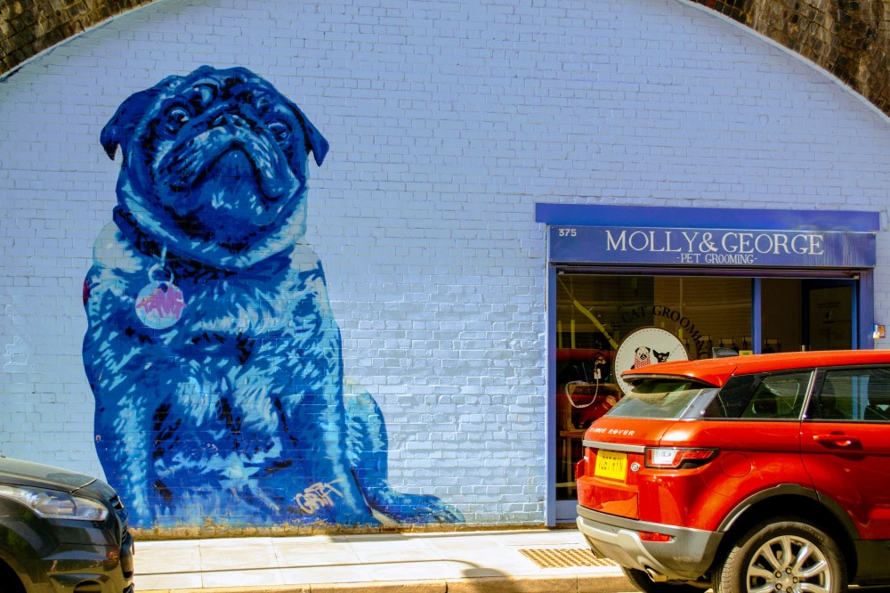 Mentmore Terrace - Dog grooming-EFFECTS.jpg